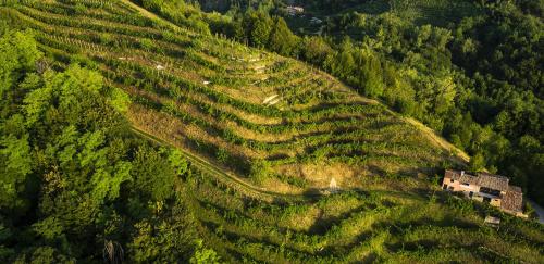 2019-07-09  colline del Prosecco Patrimonio Unesco